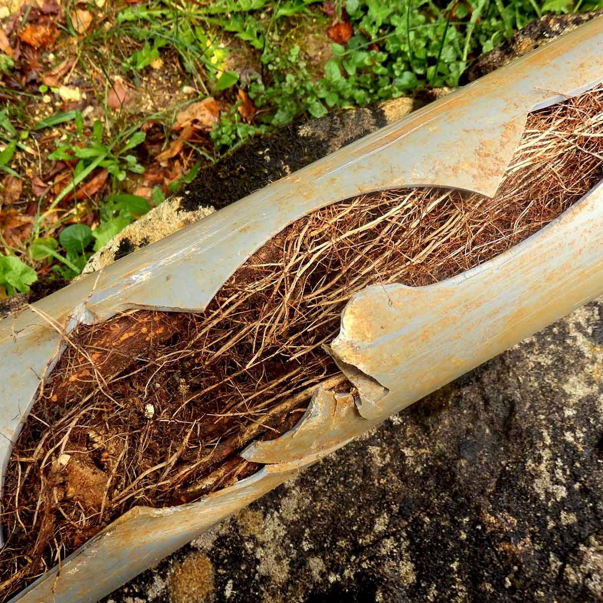drain-bloque-racines-opt